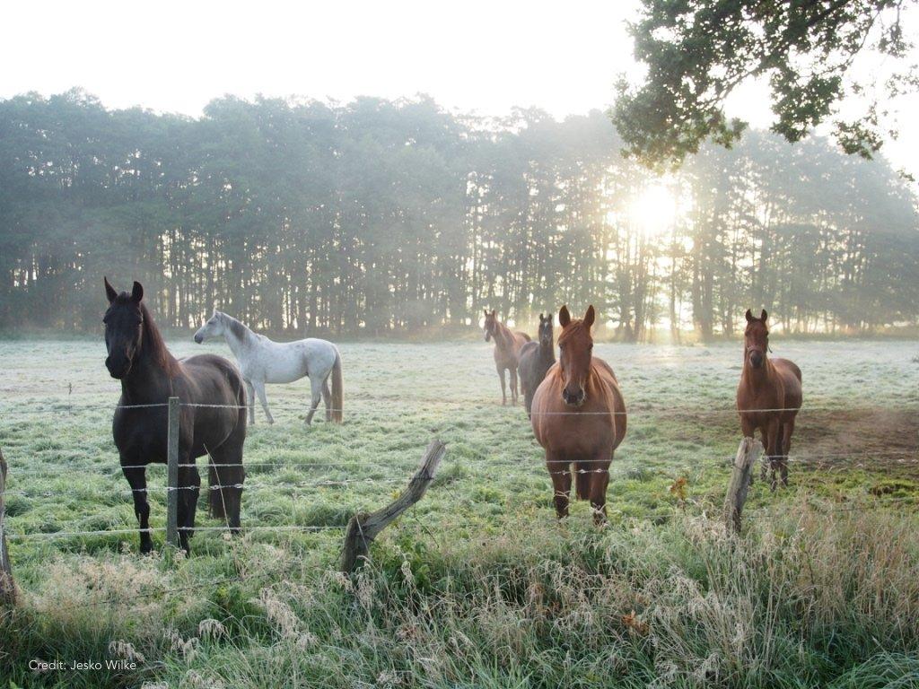 Pferde in der Morgenstimmung Foto by Jesko Wilke |MyOtherStories.de