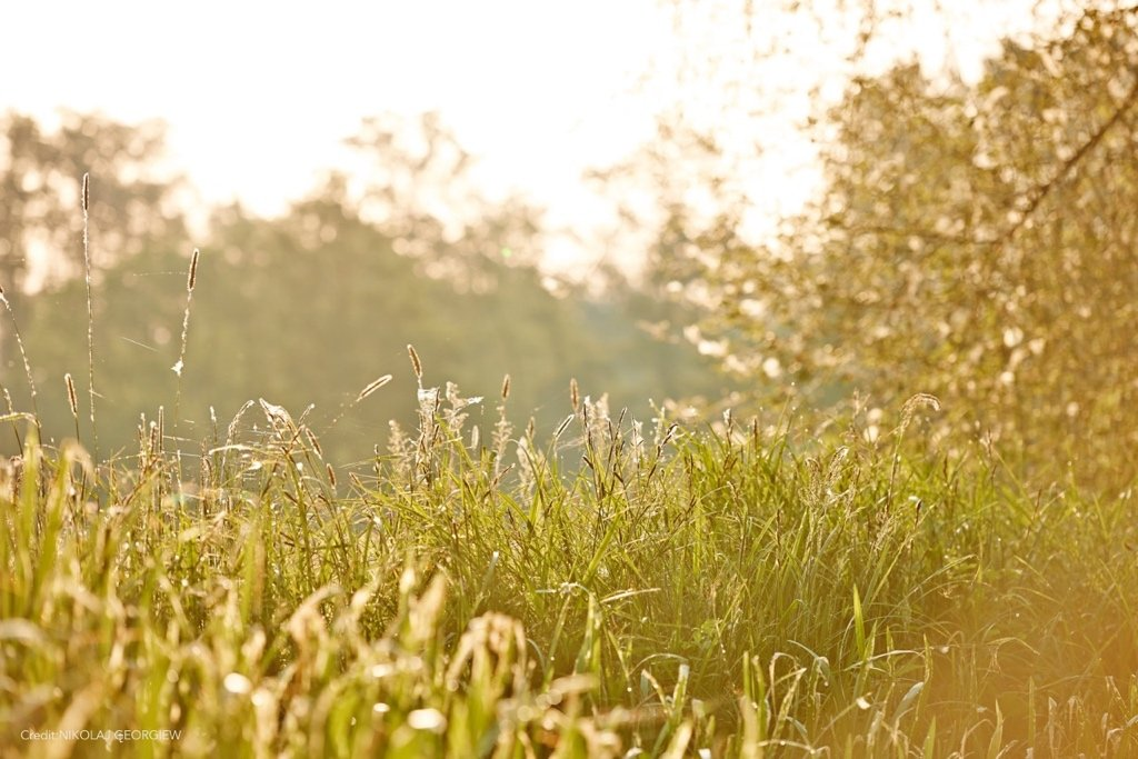 Sommerwiese Foto by Nikolaj Georgiew | MyOtherStories.de
