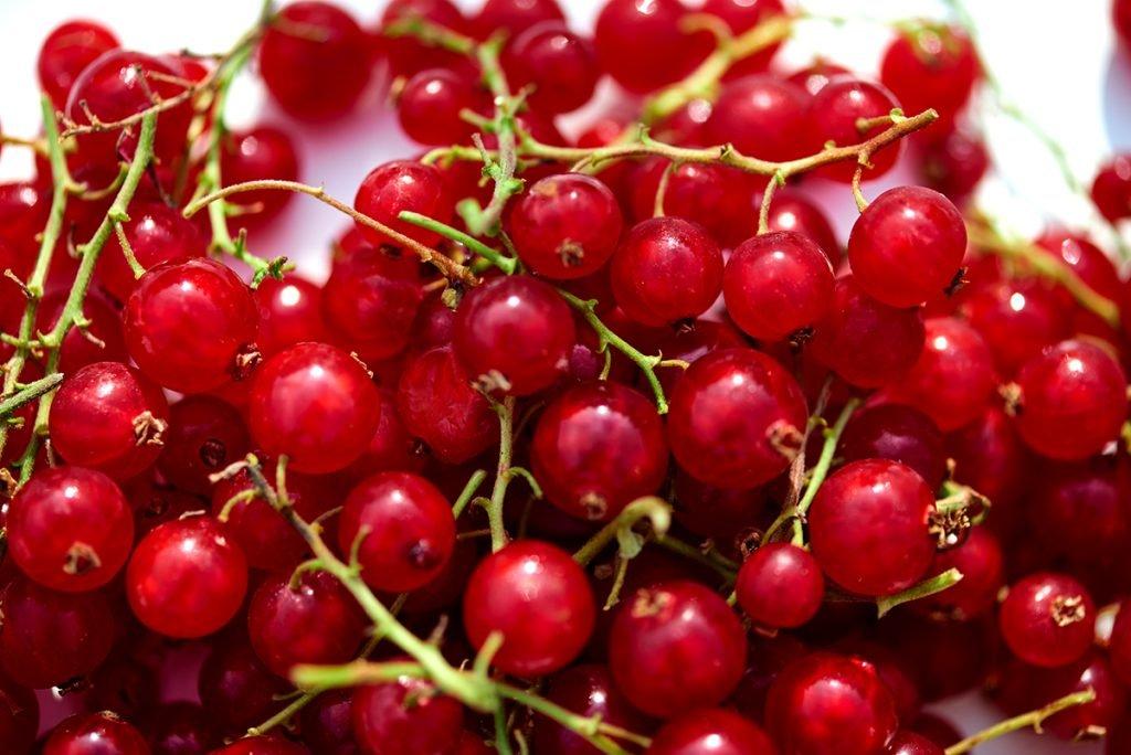Johannisbeeren-fuer-Himbeer-Kokos-Joghurt-mit- Feigen-Cranberries-und-Johannisbeeren-www.myotherstories.de-Foto: Maike Helbig