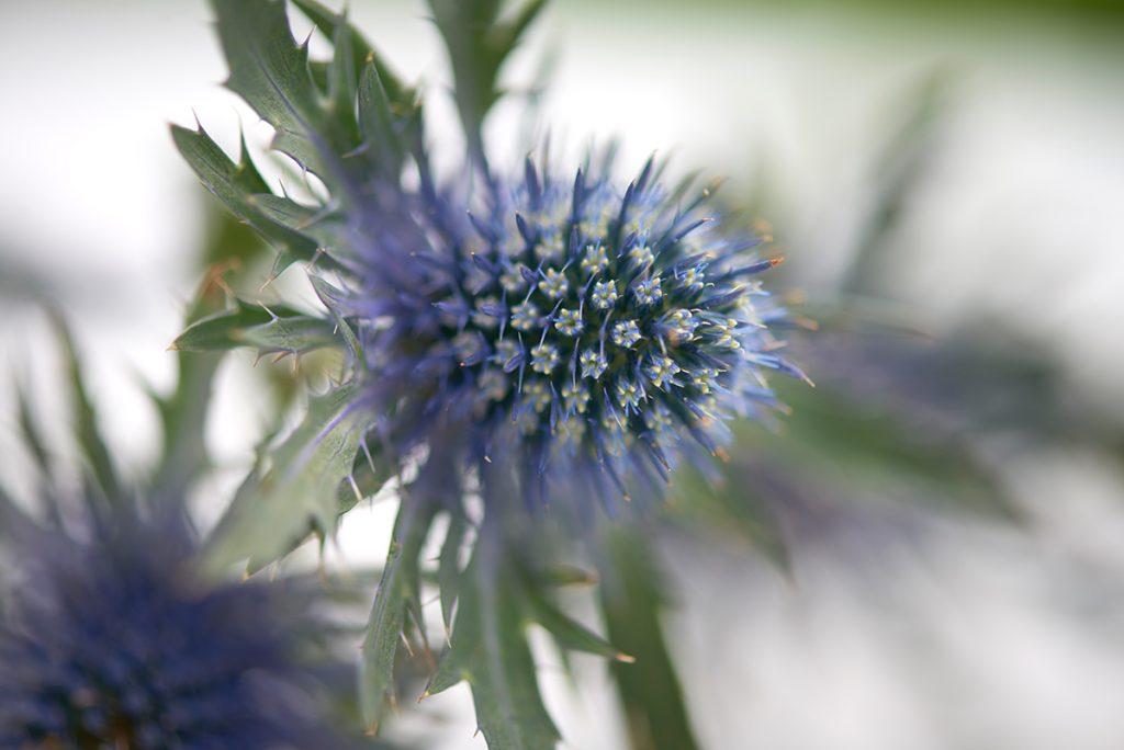 blaue-blume-Foto: Maike Helbig-fuer-www.myotherstories.de