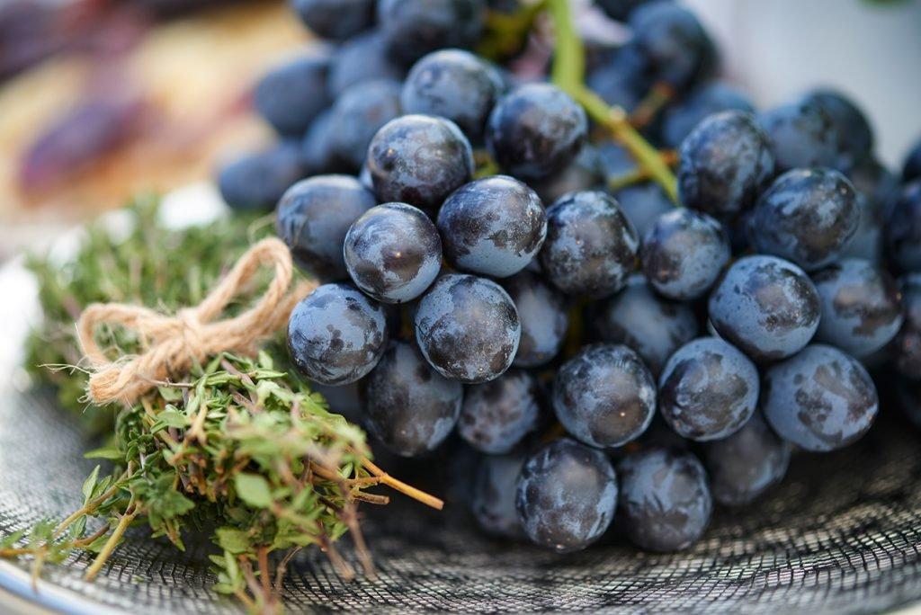 blaue-weintrauten-nachtisch-fuer-geroestete-moehren-mit-schafskaese-oliven-und-pasta-foto-maike-helbig-www.myotherstories.de