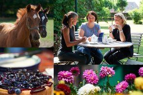 Traumhaftes Landleben: Von Kartoffeln, Pferden und Blaubeerkuchen