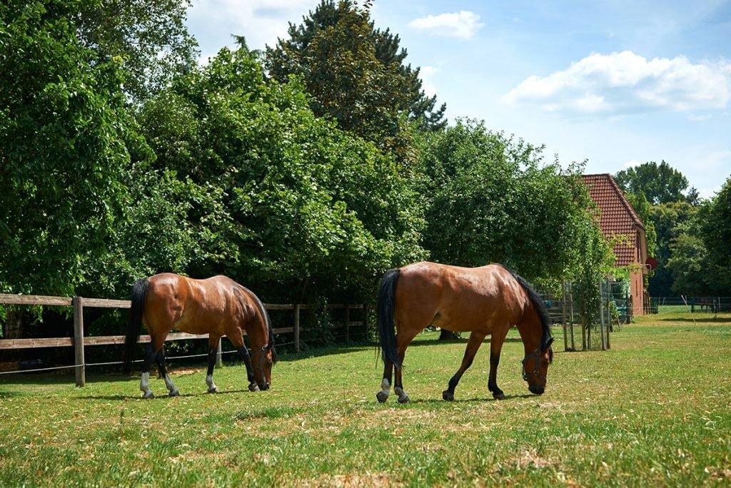 ponys-grasen-bericht-traumhaftes-landleben-von-kartoffeln-pferden-und-blaubeerkuchen-foto-maike-helbig-fuer-www.myotherstories.de