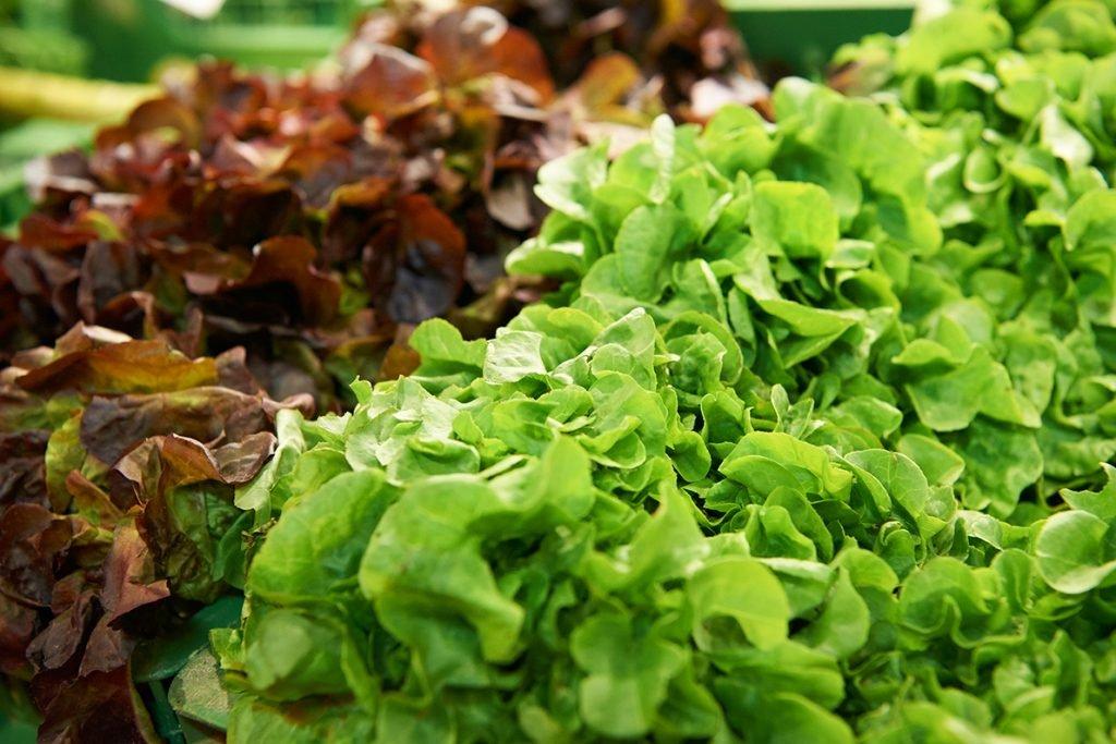 salate-im-hofladen-fuer-bericht-traumhaftes-landleben-von-kartoffeln-pferden-und-blaubeerkuchen-foto-maike-helbig-fuer-www.myotherstories.de