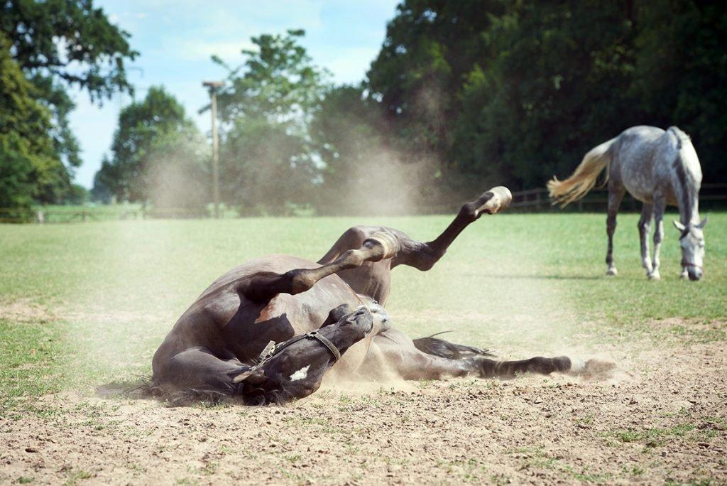 pferd-im-staub-bericht-traumhaftes-landleben-von-kartoffeln-pferden-und-blaubeerkuchen-foto-maike-helbig-fuer-www.myotherstories.de
