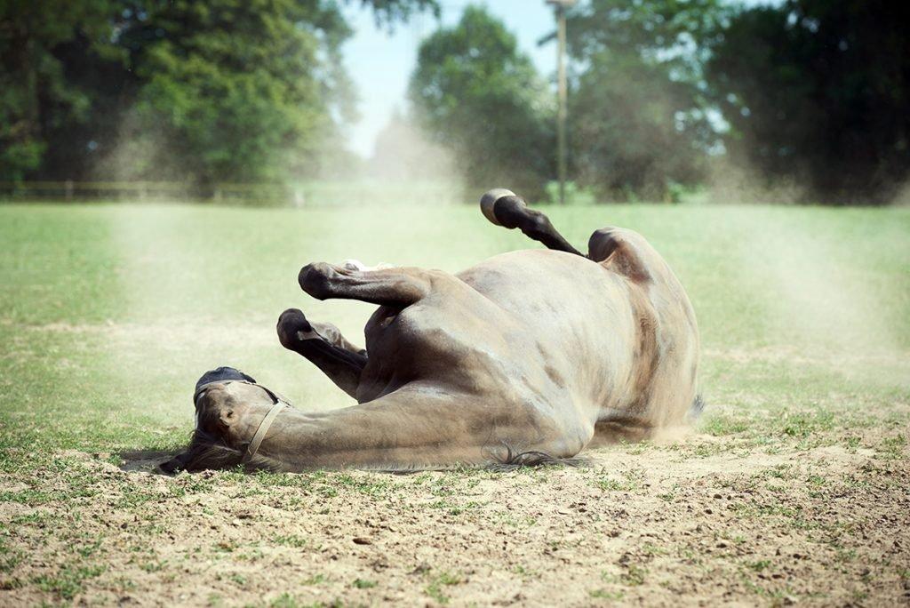 pferd-waelzt-sich-bericht-traumhaftes-landleben-von-kartoffeln-pferden-und-blaubeerkuchen-foto-maike-helbig-fuer-www.myotherstories.de