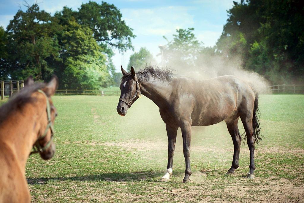 pferd-schuettelt-sich-bericht-traumhaftes-landleben-von-kartoffeln-pferden-und-blaubeerkuchen-foto-maike-helbig-fuer-www.myotherstories.de