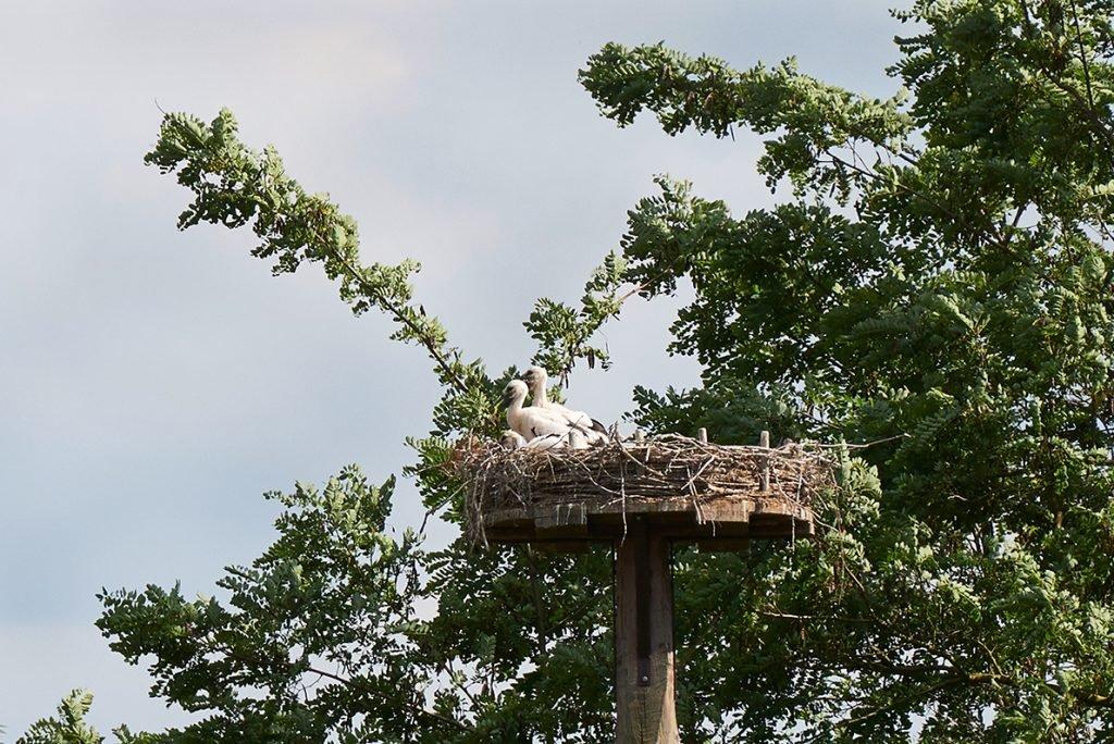 stoerche-im-nest-bericht-traumhaftes-landleben-von-kartoffeln-pferden-und-blaubeerkuchen-foto-maike-helbig-fuer-www.myotherstories.de